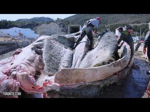 i 10 più grandi pesci trovati sulle coste