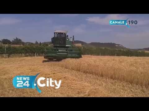 allarme grano - oltre 2 milioni di tonnellate di prodotto estero!