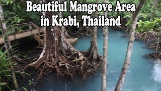 Ao Luek (Krabi) Thailand  City pictures : Beautiful National Park & Mangrove Area in Krabi Thailand: Pa Phru Tha Pom Khlong Song Nam