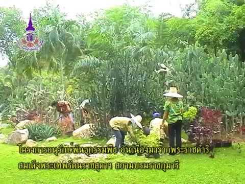 โครงการอนุรักษ์พันธุกรรมพืช อันเนื่องมาจากพระราชดำริ19