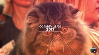 World Cat Show - 2017 - Promo