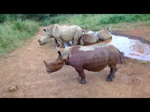 3 Day Rhino Care Quickie Safari