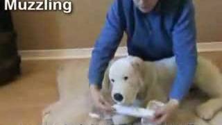 Dog And Puppy First Aid: Learn Emergency First Aid For Dogs