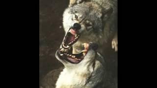 Video Aso-Naga - Už to nemůžeš vzít zpátky (Umlčené hlasy 2013)