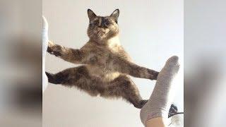Video It's TIME for SUPER LAUGH! - Best FUNNY CAT videos MP3, 3GP, MP4, WEBM, AVI, FLV Agustus 2019