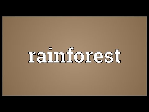 Rainforest Meaning