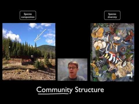 community - 046 - Communities Paul Andersen starts by explaining the major classification terms in ecology. He then explains how a community can be measured by species c...