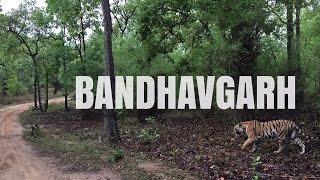 Bandhavgarh India  City pictures : Bandhavgarh Tiger Reserve, India | Sid the Wanderer