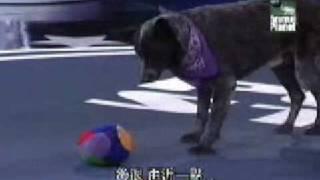 會聽人話的狗狗(動物, 電視節目, 表演)