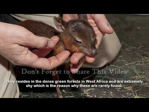 Video Top 17 Smallest Animals In The World download in MP3, 3GP, MP4, WEBM, AVI, FLV January 2017
