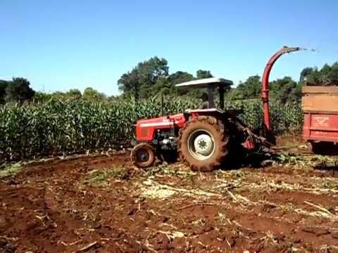 ensiladeira - Meu vizinho fazendo silagem com um MF 275 e uma ensiladeira Jumil em um dia de barro, o milho tava um pouco deitado por causa do vento que o bagunçou uns dia...