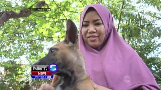 Video Muslimah Penyelamat Anjing Asal Lombok - NET5 MP3, 3GP, MP4, WEBM, AVI, FLV Oktober 2018