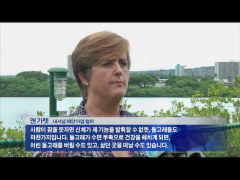 '잠못자는 돌고래' 관람 규제 추진 8.24.16 KBS America News