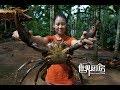 雅浦岛老酋长孤身进入红树林,徒手捕捉美味巨型泥蟹     Giant mudcrab catch and cook in Yap,FSM