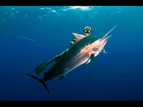 Spearfishing Madagascar & Mozambique With MJK