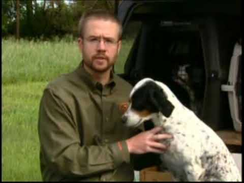 First Aid for Your Hunting Dog