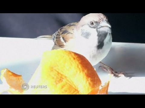 A sparrow has become the newest member of an elderly couple in Japan.