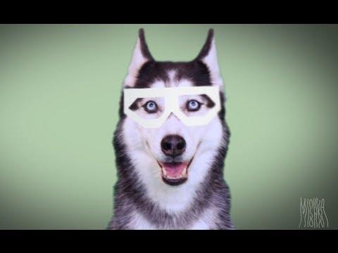 DUBSTEP пёс