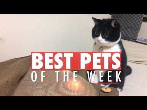 Best Pets of the Week   November 2017 Week 2