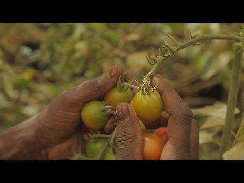 Σενεγάλη: Το μεγάλο στοίχημα για την Πράσινη οικονομία – focus