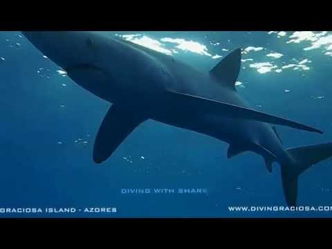Buceo Azores 2015