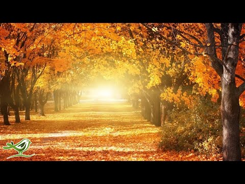 Beautiful Relaxing Music: Romantic Music, Piano Music, Violin Music, Cello Music, Sleep Music ★93
