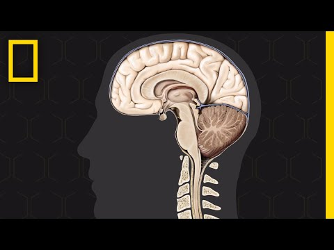Brain 101 | National Geographic