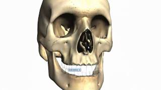 Skull Tutorial (2) - Bones Of The Facial Skeleton - Anatomy Tutorial PART 2