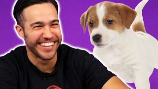 Video Fall Out Boy Plays With Puppies (While Answering Fan Questions) MP3, 3GP, MP4, WEBM, AVI, FLV Januari 2018