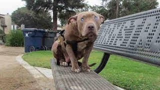 Woman Who Approaches A Dog Tied To A Park Bench Soon Realizes The Heartbreaking Truth by Did You Know Animals?