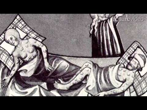 Secrets of the Black Death - by Nature Video