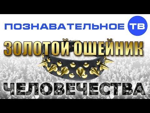 Золотой ошейник человечества (Познавательное ТВ Валентин Катасонов) - DomaVideo.Ru
