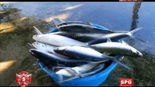 Video News5E   ISDANG KNIFE FISH NA NAGMULA AQUARIUM, SALOT SA MANGINGISDA?   RESCUE 5   JULY 7, 2013 MP3, 3GP, MP4, WEBM, AVI, FLV Desember 2018