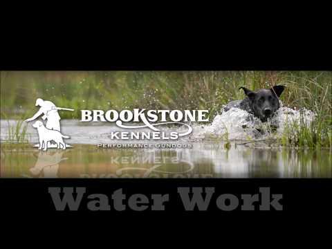 Brookstone Kennels Performance Gundogs Water Work