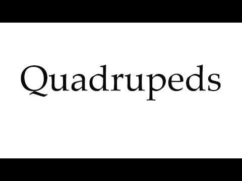 How to Pronounce Quadrupeds