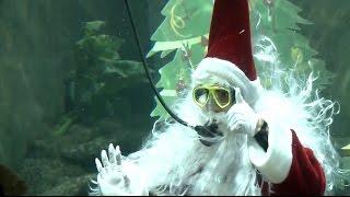 В Мексике Санта-Клауса посадили в аквариум