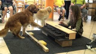 Piano dogs visiting nursing home - Klavierhunde im Pflegeheim