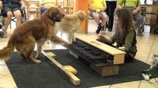 Piano dogs visiting nursing home - Klavierhunde im Pflegeheim