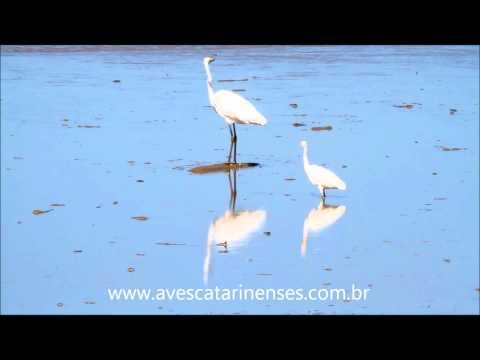 Garça-branca-pequena - Cristiano Voitina
