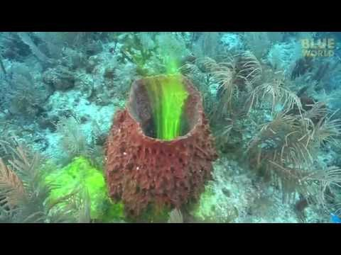 Sponges Ability To Pump Water