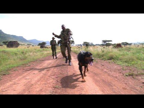 Hunde erschnüffeln Wilderer im Massai-Mara-Naturschutzg ...