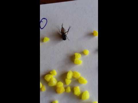 Как убить муху How to kill a fly