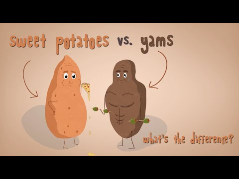What s the Difference Between Sweet Potatoes