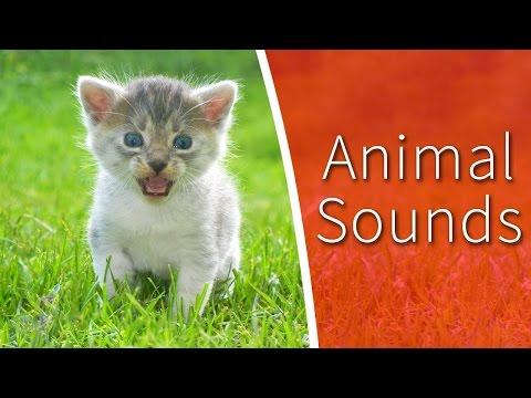 Animal Sounds for Kids - 34 amazing animals