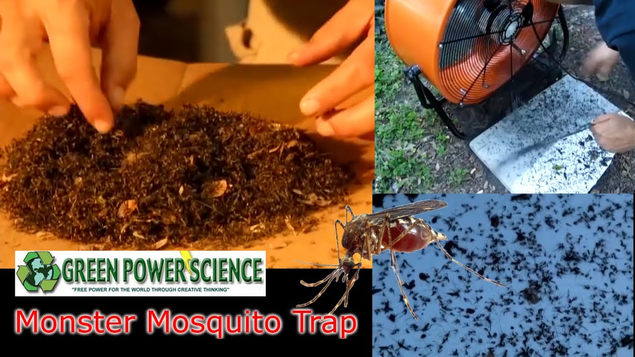 lpt request how to not get eaten alive by mosquitoes without