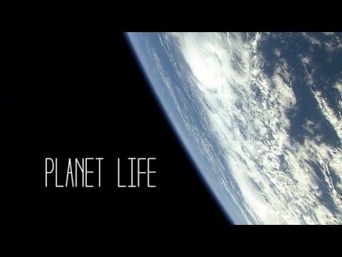 Random Rab | Planet Life