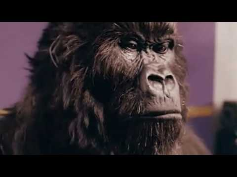LLP81 - The out takes you were never meant to see! Cadbury Gorilla goes ape. Funny spoof of the advert.