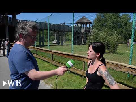 Schloß Holte-Stukenbrock: Geparden-Nachwuchs im Saf ...