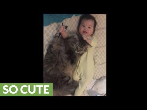 il-gatto-e-le-coccole-con-il-bebe