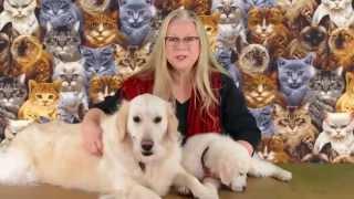 Houston Quilt Festival 2014 - Amazing Animal Quilts